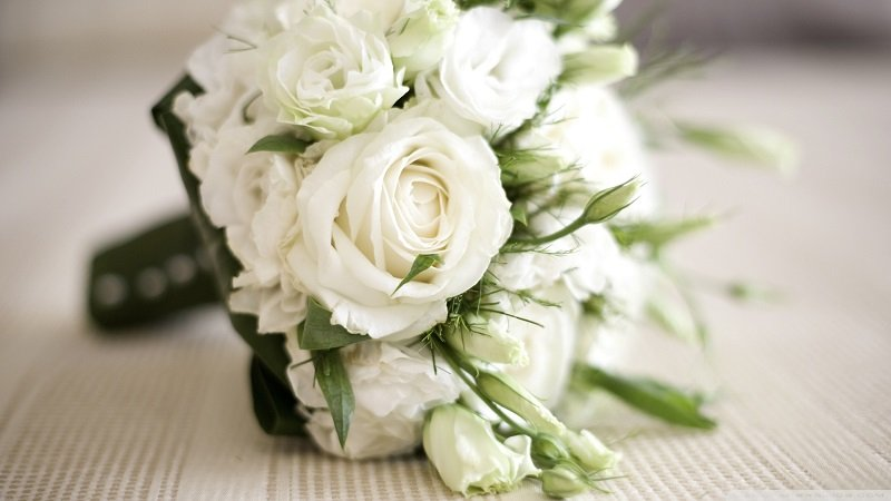 rose-day-White-Roses