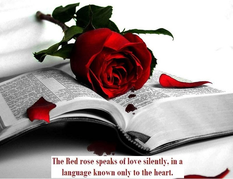 Red-rose-flowers-with-Love-book-messages