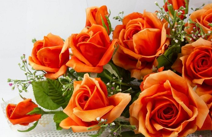 rose-day_orange_roses