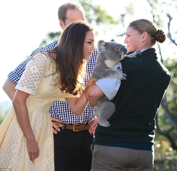 kate-middleton-royal-tour-koala