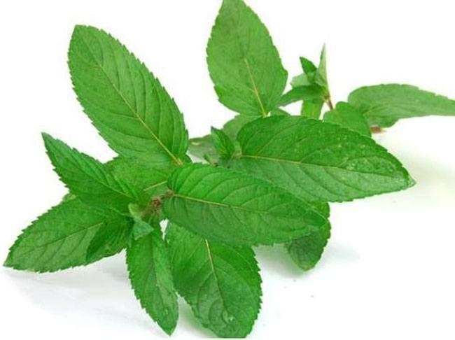 Mint for Acidity