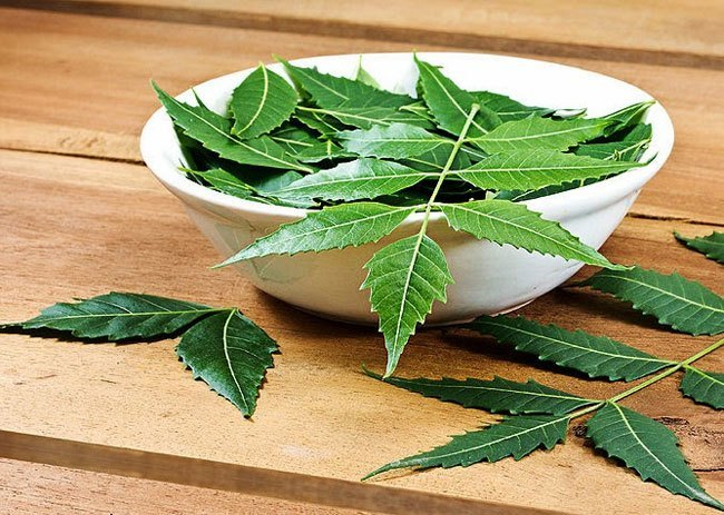 Neem Benefits For Health