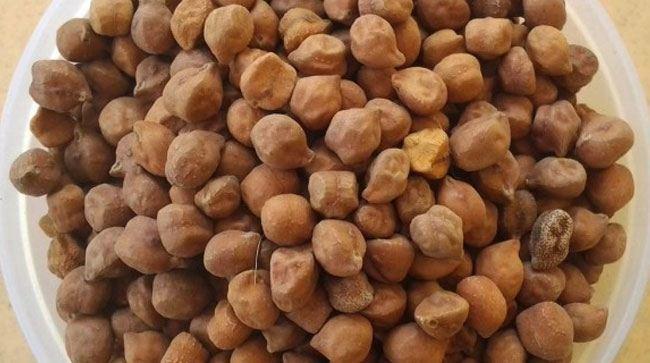 Bengal gram chickpeas
