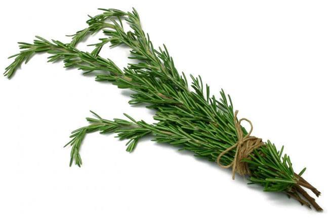 Rosemary as Natural Medicine For Memory Loss