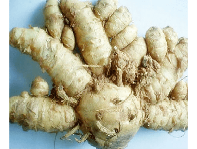 Tighten Vaginal Walls with Curcuma Comosa