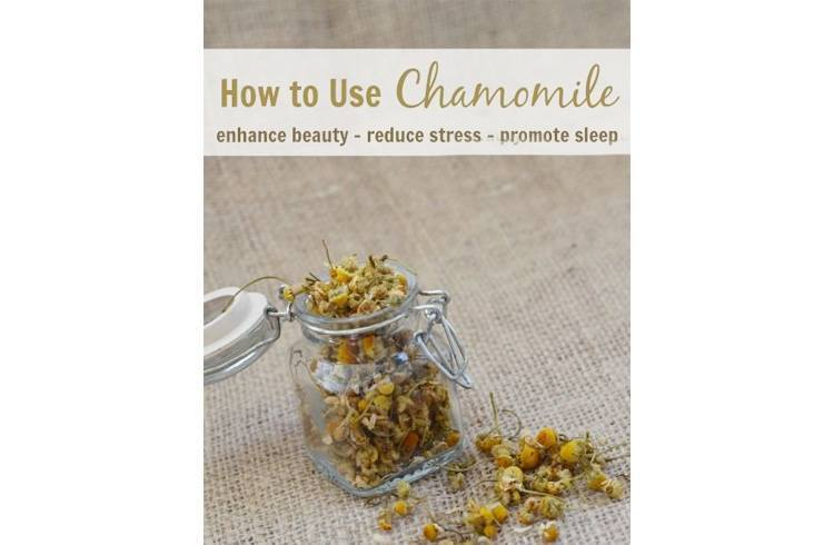 Benefits of chamomile