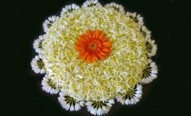 Latest Flower Rangoli Designs