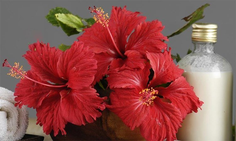 Benefits of Hibiscus Oil