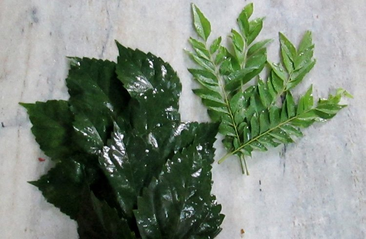 Hibiscus and Curry Leaves for Thick Hair