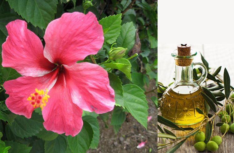 How to make hair oil with hibiscus flower