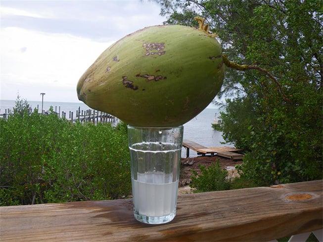 Coconut water toner