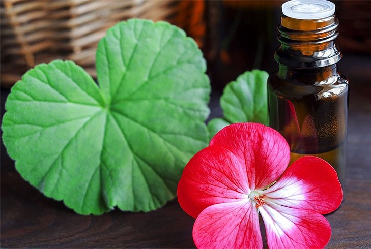 "Benefits of geranium oil for hair ""width ="" 729 ""height ="" 490 ""srcset ="" https://www.fashionlady.in/wp-content/uploads/2016/09/geranium-oil-benefits-for-hair.jpg 729w, https://www.fashionlady.in/wp-content/uploads/2016/09/geranium-oil-benefits-for-hair-300x202.jpg 300w, https://www.fashionlady.in/wp-content /uploads/2016/09/geranium-oil-benefits-for-hair-149x100.jpg 149w, https://www.fashionlady.in/wp-content/uploads/2016/09/geranium-oil-benefits-for- hair-50x34.jpg 50w, https://www.fashionlady.in/wp-content/uploads/2016/09/geranium-oil-benefits-for-hair-75x50.jpg 75w, https: //www.fashionlady. in / wp-content / uploads / 2016/09 / geranium-oil-benefits-for-hair-600x403.jpg 600w ""sizes ="" (maximum width: 729px) 100vw, 729px"