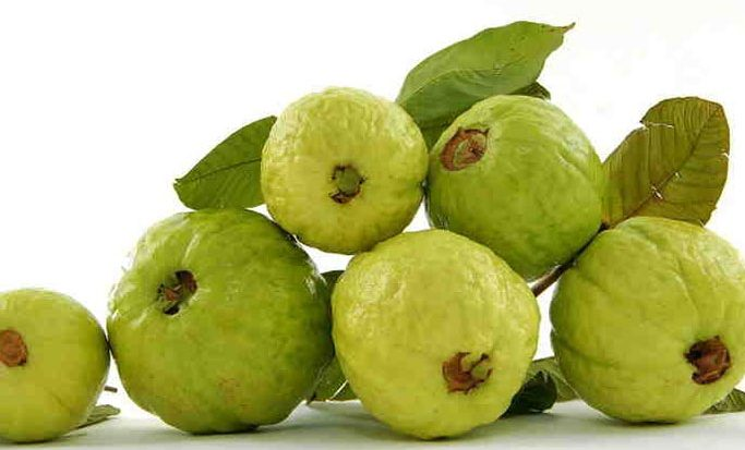 guava leaves extract for skin