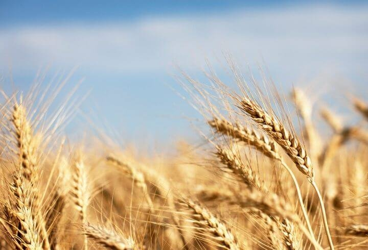 Breastfeeding Wheat foods to avoid