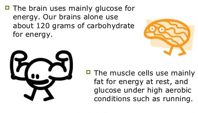 Carbohydrate as fuel