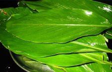 Turmeric Leaves Uses