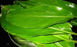 Turmeric Leaves Uses