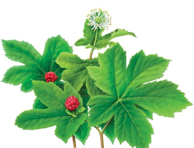 Goldenseal Herb