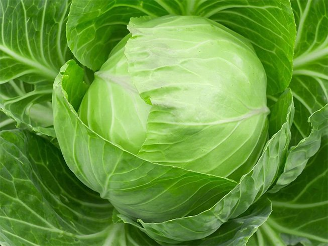 Cabbage for Cyst