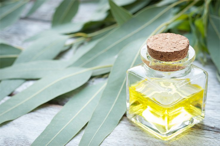 Eucalyptus Oil Sinusitis
