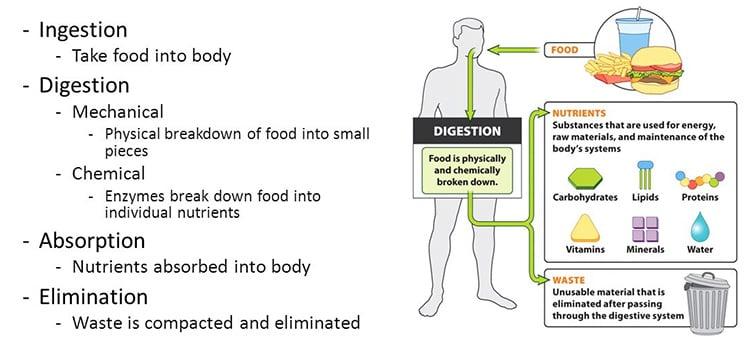 Verdauungssystemkrankheiten - Behandlung und Prävention mit Hausmitteln