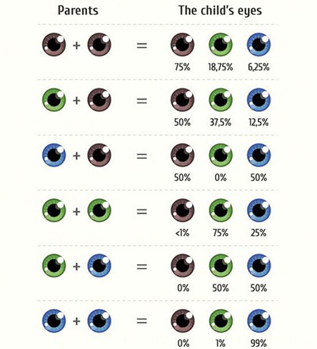 Eye Color Genetics Charts