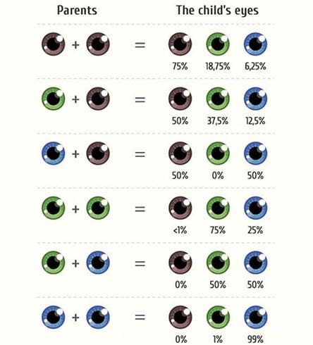 Eye Color Genetics Charts