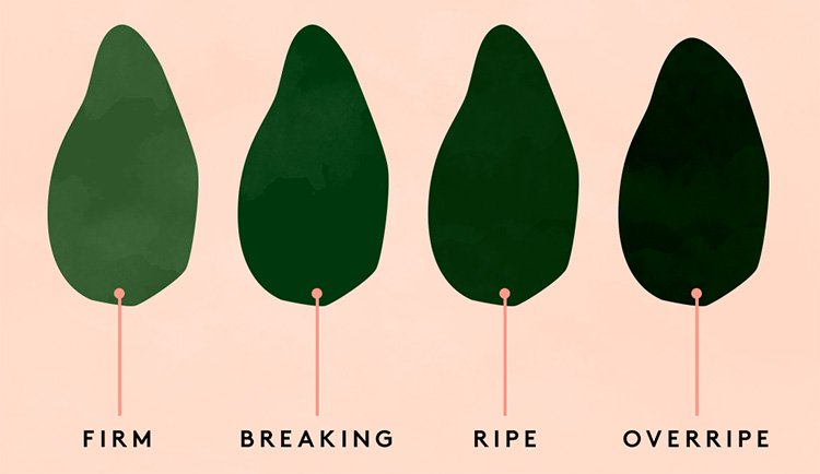 How to Tell If the Avocado Is Ripe
