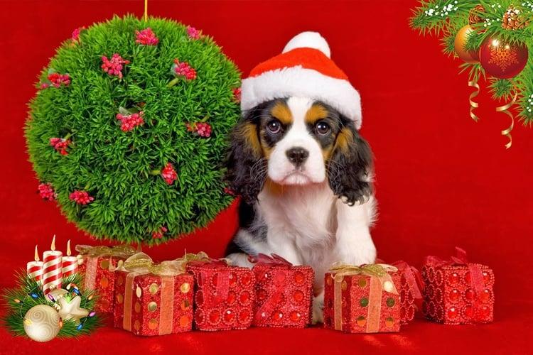 Dog lover christmas gift ideas