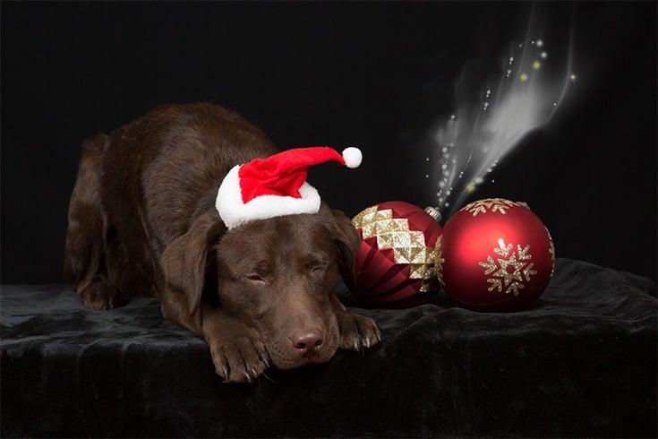 ChristmasGiftIdeasFor DogLovers