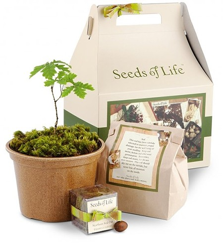 Tree And Seed Gift Set