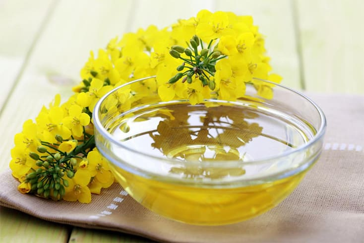 Canola Oil Is Made From