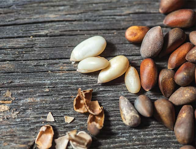 Pine Nuts Side Effects