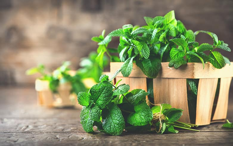 Mint Leaves Nutritional Value