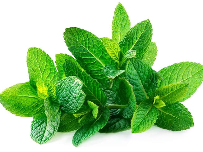 Mint Leaves Uses