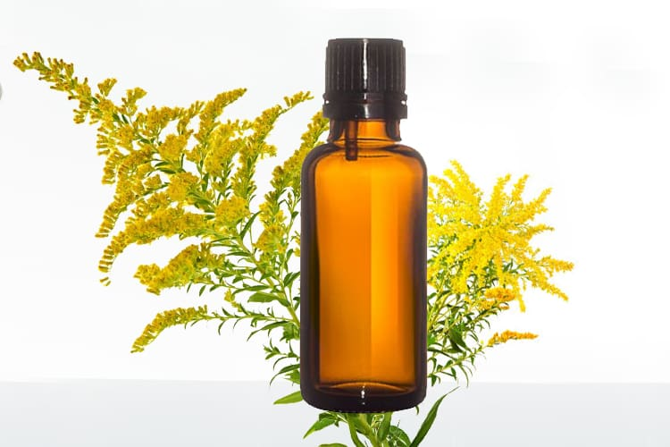 Goldenrod Essential Oil Benefits