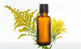 Goldenrod Essential Oil Uses