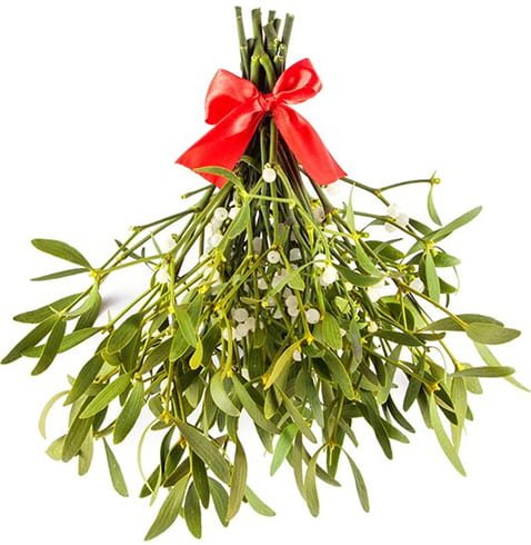 Side Effects of Mistletoe